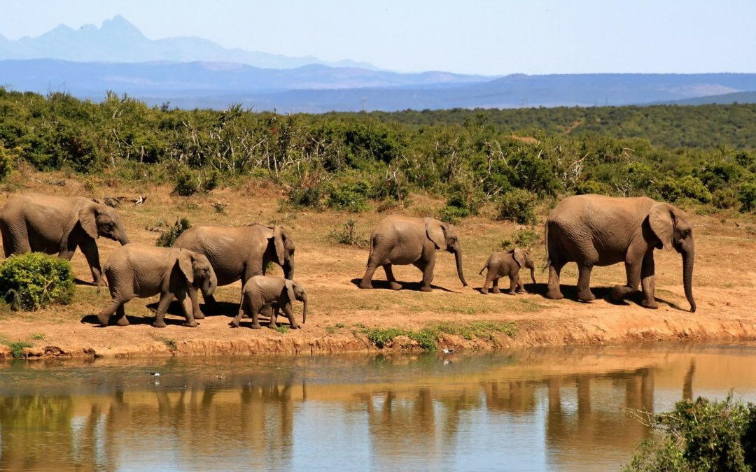 Play with the extremes at Africa