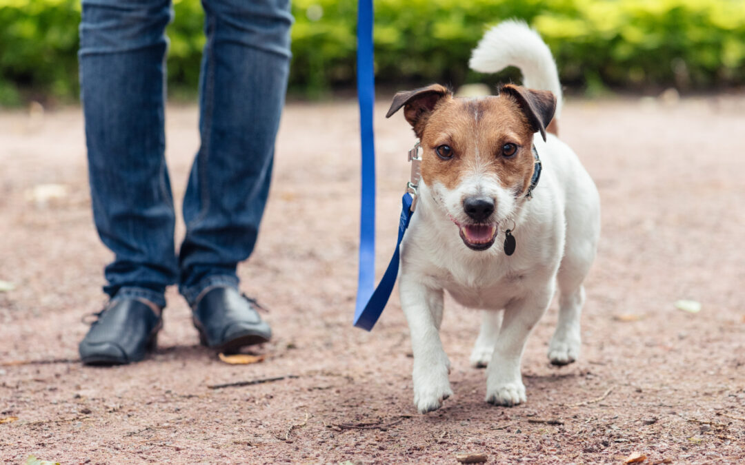 How to Help a Dog Lose Weight