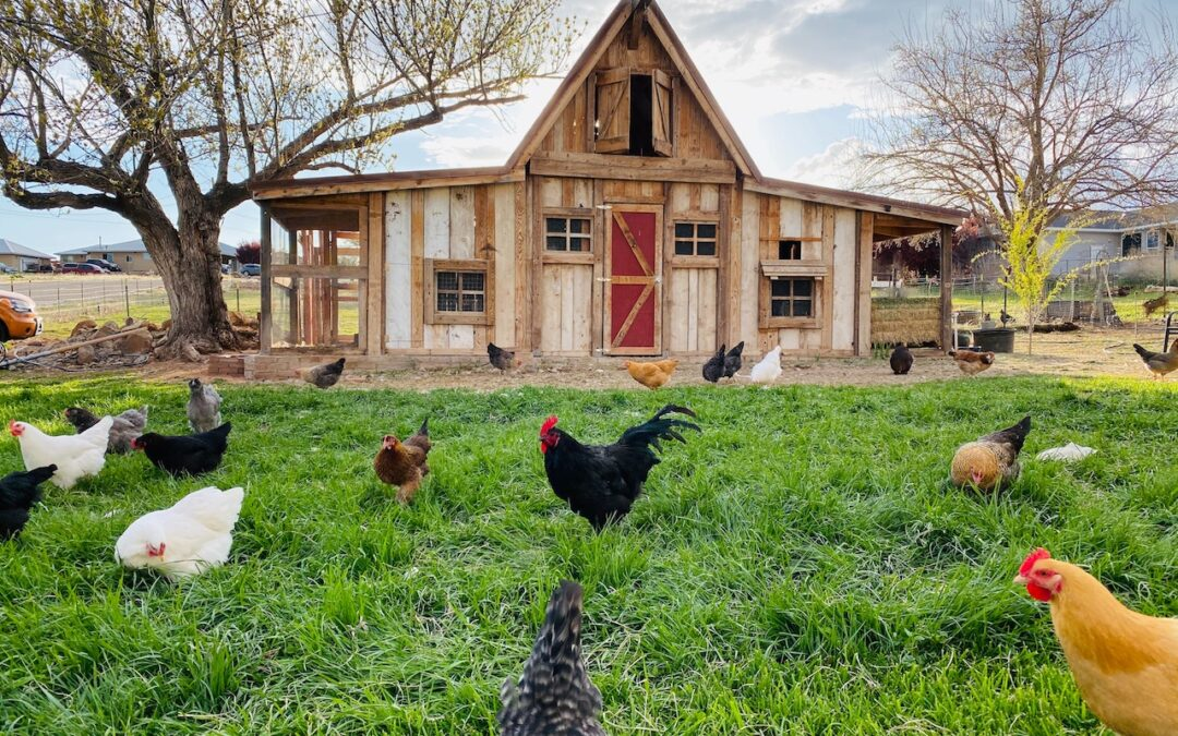 Quick Tips for Maintaining a Healthy and Organic Chicken Coop