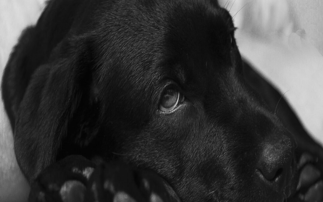 The Most Common Types of Cancer in Dogs